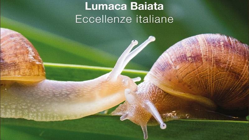 La Lumaca Baiata: eccellenza siciliana tra qualità e umanità