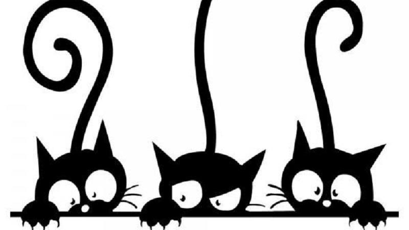 Miao Festival 2018: a Palermo un evento dedicato ai gatti