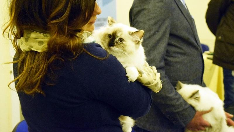 Miao Festival 2019: torna a Palermo l'evento dedicato ai gatti