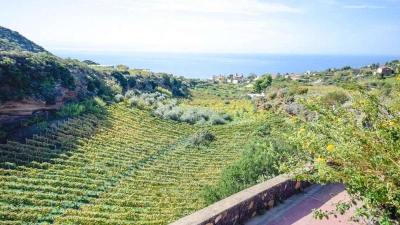 Agriturismi: cresce del 3,3% l'offerta turistica nelle aziende agricole italiane