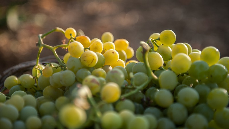 Cantine Pellegrino: il vino protagonista tra famiglia, storia e territorio