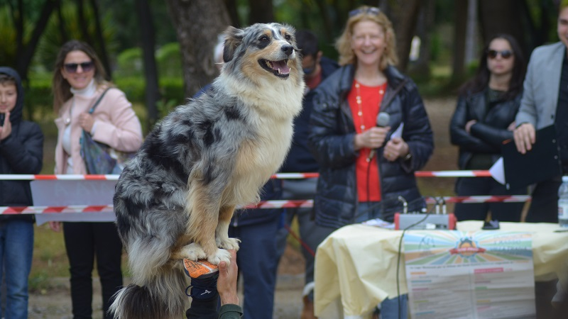 Dog Fest 2019: la fotogallery dell'evento