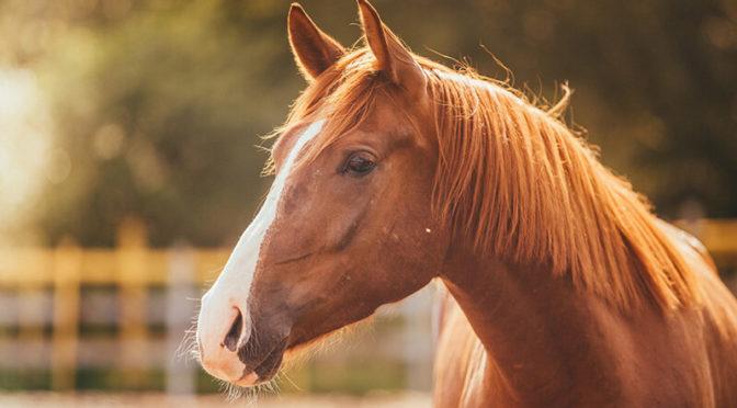 Fiera Mediterranea del Cavallo a Militello dal 10 al 12 maggio