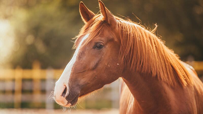 Fiera Mediterranea del Cavallo dal 10 al 12 maggio a Militello