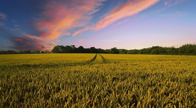 RI-coltiviAMO il Futuro. Costruire insieme un sistema agroalimentare sostenibile e inclusivo