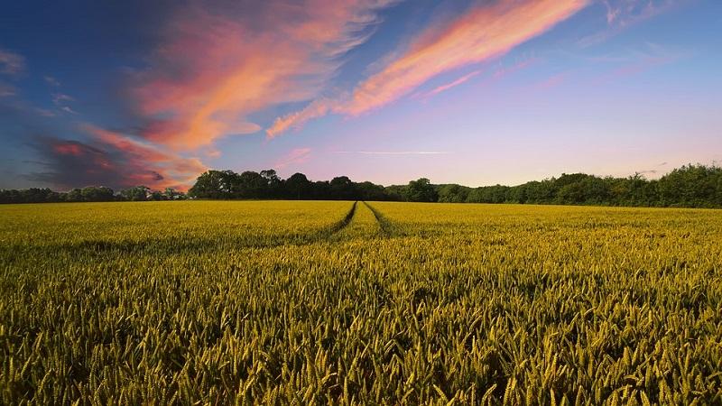Ri-coltiviAmo: come costruire un sistema agroalimentare sostenibile e inclusivo