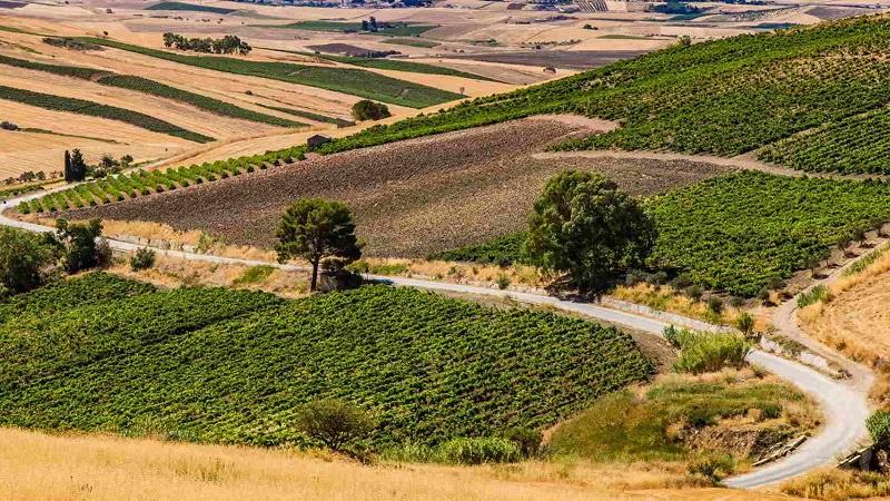 Sviluppo rurale in Sicilia: dalla Regione 45 milioni di euro per 204 agriturismi
