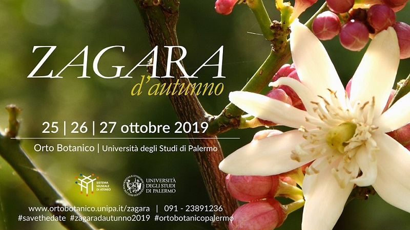 Zagara d'autunno 2019 Orto Botanico Palermo