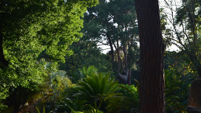 Palermo, riapre l'Orto Botanico dopo la quarantena